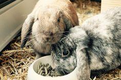 Two snuggle bunnies....