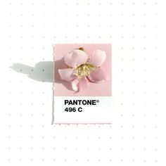 Graphic Designer Inka Mathew Matches Everday Objects to Pantone Colors in Fresh