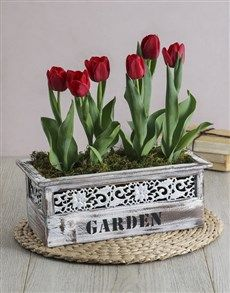 flowers: Red Potted Tulips in Garden Wooden Box! Flower Delivery Service, Welcome Spring, Plants Online, Order Flowers, Spring Day, Wooden Boxes, Garden, Red, Gifts