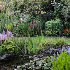 Moisture-loving astilbes waterlilies flag irises and pontederia dominate the fore of this garden pond. A border of stipa fennel lilies eryngiums sedums phlox and more provide a colourful backdrop
