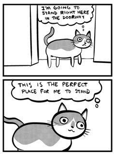 Funny cat stuff
