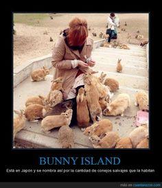 ¿Qué tiene de especial la isla de Okunoshima? Pista: Tienen orejas peludas - Está en Japón y se nombra así por la cantidad de conejos salvajes que la habitan