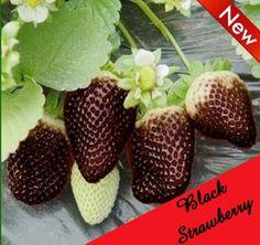 20 Seeds Rare Black Strawberry Black Pineberry Seeds Fruit Fresh Exotic Seeds #RareBlackStrawberry