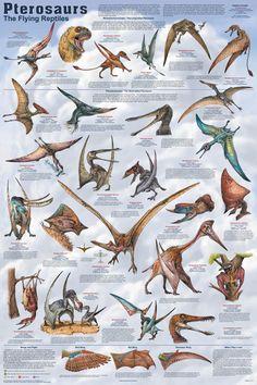 Prehistoric Dinosaurs, Prehistoric World, Prehistoric Creatures, Reptiles, Mammals, Dinosaur Art, Dinosaur Fossils, Jurassic Park World, Extinct Animals
