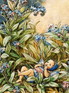 Forget-me-not fairy Cicely -Mary   Barker.