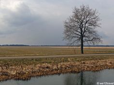 Typical Dutch landscape in wintertime #netherlands