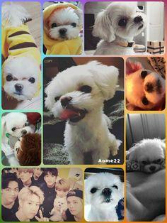 Happy 2 years cutie Coco