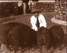 Jack London with some of his pigs at the Beauty Ranch in Glen Ellen, now a State Historic Park