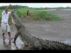 smile at a crocodile then tip my hat and stop to talk a while