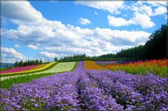 Dalat, Vietnam  Dalat is known as the highland city of thousands of flowers. Visiting this place, travelers will gain the unforgettable impression due to the cool climate and the beautiful landscape.