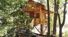 Casa sull'albero a due piani cercasi