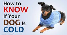 If you're going to buy a sweater for your dog, try a fabric that can be easily washed and dried, and one that won't itch or irritate your pet's skin. http://healthypets.mercola.com/sites/healthypets/archive/2015/01/23/dog-sweaters.aspx
