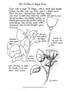 Rose Drawing How to Draw Worksheets for The Young Artist: How To Draw A Simple Rose. Lesson and Worksheet Basic Drawing, Drawing Lessons, Drawing Techniques, Drawing Tips, Drawing Sketches, Sketching, Drawing Art, Realistic Drawings, Easy Drawings