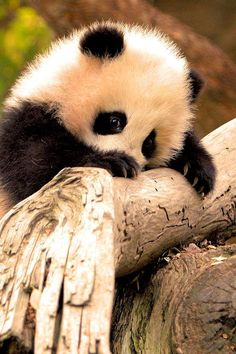 Cute Baby Animals Pictures - Android Apps on Google Play