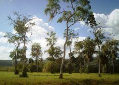 Bolívar, municipio Piar. Remanentes de Bosques Primarios del Trópico Lluvioso Guacuripia Manganeso Guanaraparo Municipio Padre Chien Vía El Palmar Upata, Bolívar.