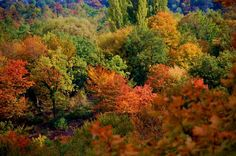 Autumn colours in Sabina, Italy. Photo by Luca Bellincioni Autumn Colours, Countryside, Rome, Country Roads, Italy, World, Holiday, Plants, Travel