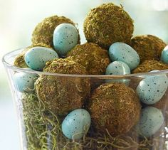 Moss balls and robin's eggs