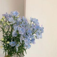 Light Blue Aesthetic, Blue Aesthetic Pastel, Aesthetic Colors, Flower Aesthetic, Aesthetic Photo, Aesthetic Pictures, Nature Aesthetic, Japanese Aesthetic, Japanese Style