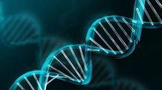 Encuentran una posible manera de poder editar la genética, tanto borrar, añadir o cambiar genes a voluntad. Gracias a este avance se podría corregir por ejemplo el defecto genético que causa la hemofilia.