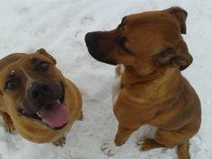 #dogisgood #dogmom #dogmomoftheyear www.dogisgood.com