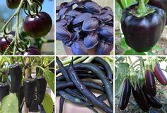Black Veggie Seeds Gift Box #BlackVegetables #BlackGarden