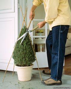 Trim your topiary: Tie three bamboo poles of appropriate height together at the top. The feet of the poles can be spread or pulled closer to form a broader or taller cone. Garden Yard Ideas, Lawn And Garden, Garden Projects, Garden Art, Garden Design, Container Gardening, Gardening Tips, Martha Stewart Home, Bamboo Poles