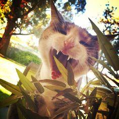 My Little Yawning, kitty cat yawn