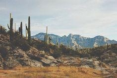 Image result for desert aesthetic