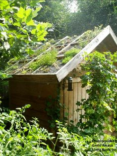 Garden shed with green roof
