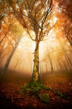 Tree inspiration  Stand tall  Grow towards the light  Don't be afraid to change  You will grow even stronger when you do:)    I just love trees!!!!!