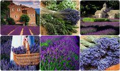 Čarovné Provence - Provensálsko