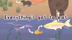 Elementary Science Lesson Plan - Food Chains - Flocabulary