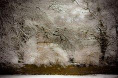 Hill of Tara Snowy Trees