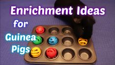 Over 25 toys and enrichment activities to try with your guinea pigs. - Over 25 toys and enrichment activities to try with your guinea pigs. Diy Guinea Pig Toys, Diy Guinea Pig Cage, Pet Guinea Pigs, Guinea Pig Care, Guine Pig, Guinea Pig Accessories, Class Pet, Guinea Pig Bedding, Pig Crafts