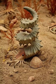"""This awesome replica of a turrilitid ammonite is from the Cretaceous Seas diorama at the American Museum of Natural History."""