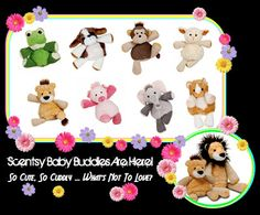 Scentsy Buddy Babies are here!