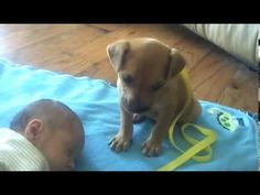 Little Puppy Wants to Stand Gaurd Over His New Best Buddy — There's Just One Problem  ...ok heart melted!  =)