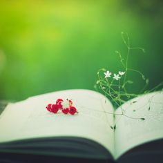Red flowers on a book. The first days of summer.