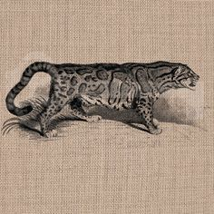 Vintage Clouded Leopard Digital Download No278 by TanglesGraphics, $1.00