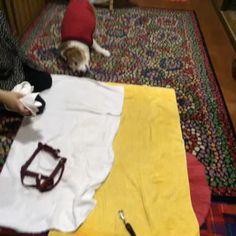 雨の散歩後、用意したタオルじゃなく絨毯で身体を拭くジャックさん。