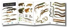 Reptiles and Amphibians of Britain and Ireland FSC Field Guide www.froglife.org/shop