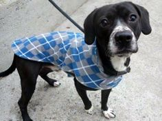 TO BE DESTROYED THUR, 2/27/14 - Manhattan Center    CUVEK - A0992163   Main thread: https://www.facebook.com/photo.php?fbid=762532503759631&set=a.617938651552351.1073741868.152876678058553&type=3&permPage=1