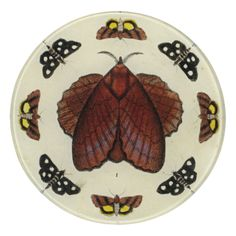 John Derian Company Inc — Butterfly Collage
