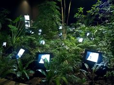 Nam June Paik - TV Garden, video installation with color television sets and live plants, dimensions vary with installation Nam June Paik, Video Installation, Fluxus, Stage Design, Oeuvre D'art, Aesthetic Pictures, Art Direction, Mother Nature, Art Inspo