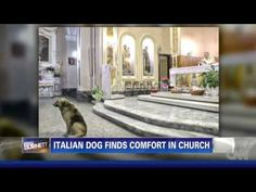 Italian dog finds god, frequents church