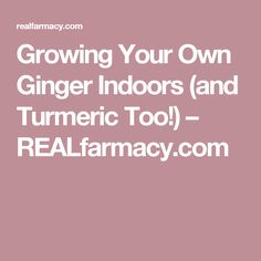 Growing Your Own Ginger Indoors (and Turmeric Too!) – REALfarmacy.com