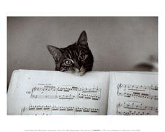 Cat photos , Posters and Prints at Art.com