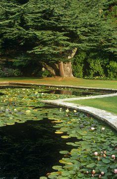 beautiful backyard pond...I wish! Pond Landscaping, Ponds Backyard, Garden Pool, Water Garden, Amazing Gardens, Beautiful Gardens, Forest Flowers, Water Lilies, Dream Garden