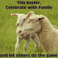 Happy Easter: celebrate with family and let others do the same #vegan #cards