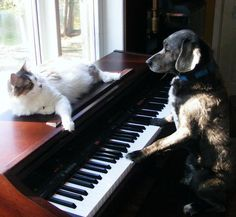 Ha! This reminds me of Charlie Brown when Lucy is hanging around the piano while Schroeder is playing :)